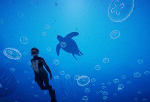 Раскройте тайны глубокого синего моря в Beyond Blue