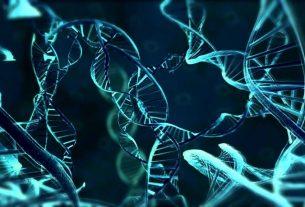 Анимус в Кредо Ассасина: возможно ли такое? И что такое генетическая память?